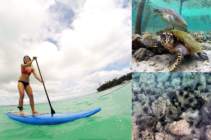 Paddleboarding; swimming with turtles' eating uni fresh from the sea