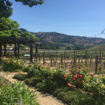 24 hours in Napa Valley